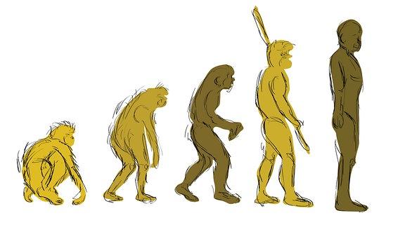 Darstellung der Evolution