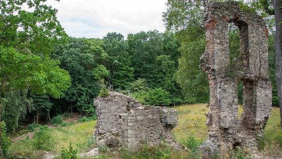 Die Burgruine Stecklenburg steht mitten im Wald.