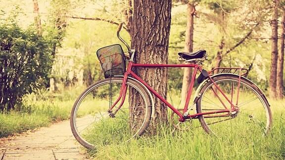 Ein Fahrrad steht an einen Baum.