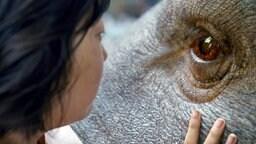Die junge An Seo Hyun kümmert sich um die sanftmütige Kreatur Okja.
