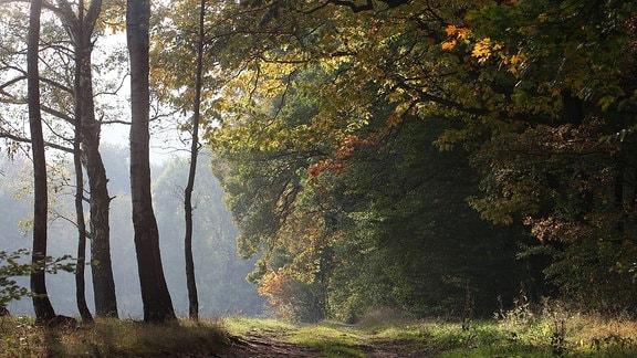 Finsterbergen - Wanderwege im Thüringer Wald