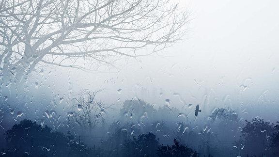 grauer Herbsttag mit Regen