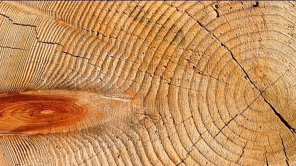 Die Jahresringe eines Baumes