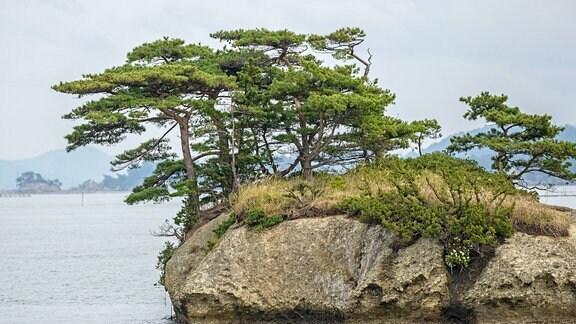 Japanische Rot-Kiefern auf einem Fels im Wasser