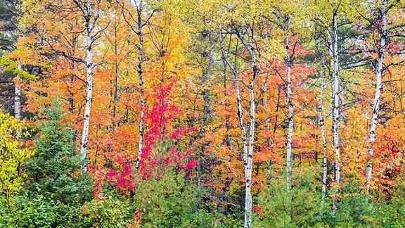 Kiefernwald im Herbst