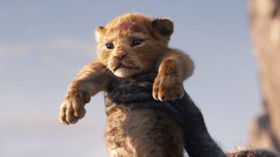 Ein Löwenbaby wird in die Höhe gehoben.