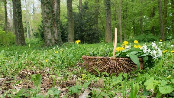 Korb mit Kräutern in einem Wald