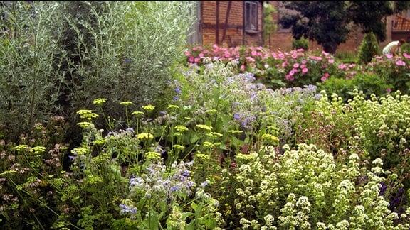 Blick in einen Kräutergarten