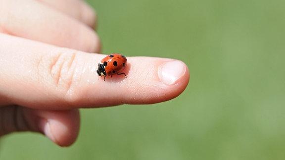 Marienkäfer auf einem Finger
