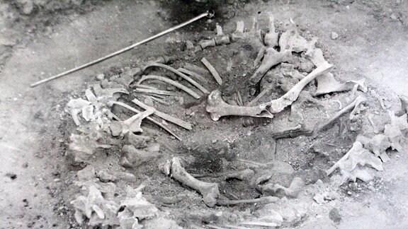 Prähistorische Sammlung Köthen - Jungsteinzeitliches Grab