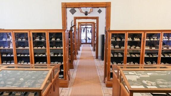 Blick in die historische Sammlung im Naturalienkabinett von Museum Waldenburg. Mit Millionenaufwand wurde das Haus und die usstellung in den letzten drei Jahren auf den neuesten Stand der Technik gebracht.
