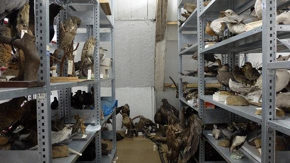 Im Depot des Naturkundemuseums Gera