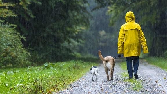 Frau beim Spaziergang mit Hunden im Regen