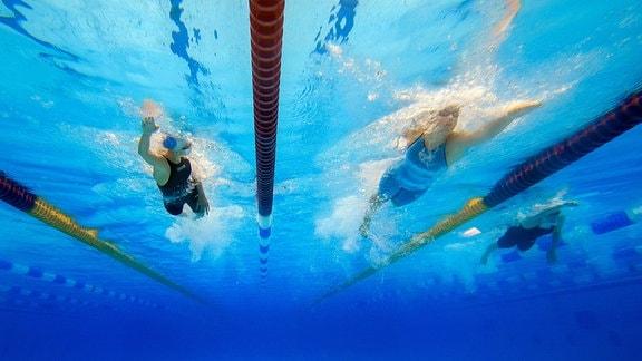 Schwimmer ziehen im Wasser ihre Bahnen