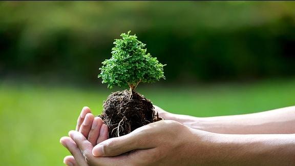 Eine Hand hält einen kleinen Baum.