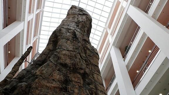 Versteinerter Baumstamm im Tietz, Chemnitz