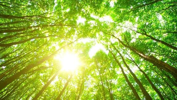 Die Sonne scheint durch ein Blätterdach
