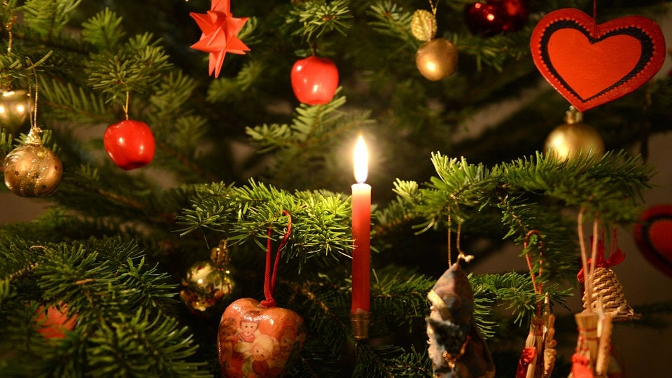 martin luther der erfinder des weihnachtsbaums mdr de. Black Bedroom Furniture Sets. Home Design Ideas