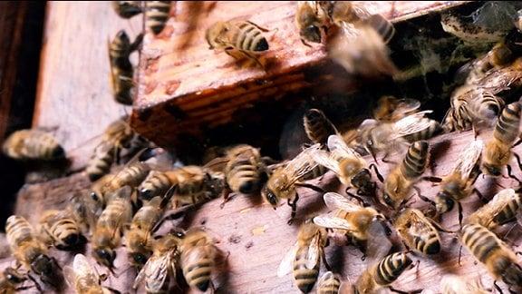 Bienen am Bienenstock von Alfred Schönborn