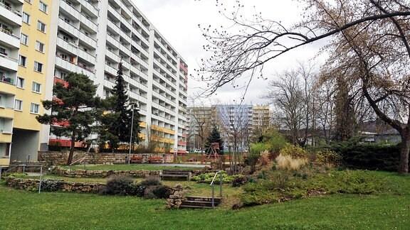 Gartenbegrünung zwischen den Platten in Jena Lobeda.