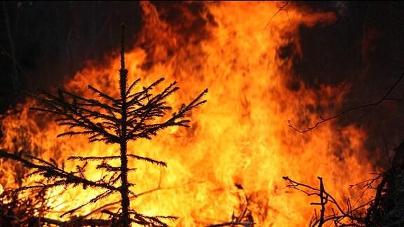 Bäume und Sträucher brennen im Wald.
