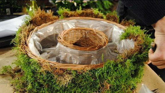 Ein mit Moos umwickelter Pflanzring aus Korbgeflecht