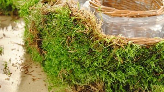 Nahaufnahme eines mit Moos umwickelten Pflanzrings aus Korbgeflecht