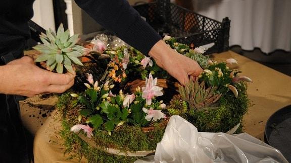Die Hände einer Frau ordnen verschiedene Pflanzen auf einem mit Erde gefüllten Pflanzring aus Korbgeflecht an