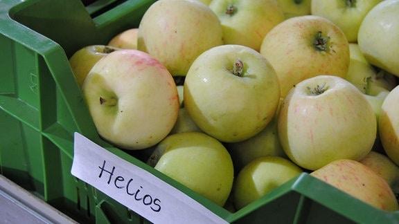Zahlreiche hellgrüne Sommeräpfel der Sorte 'Helios' liegen in einer flachen, grünen Kunststoffkiste