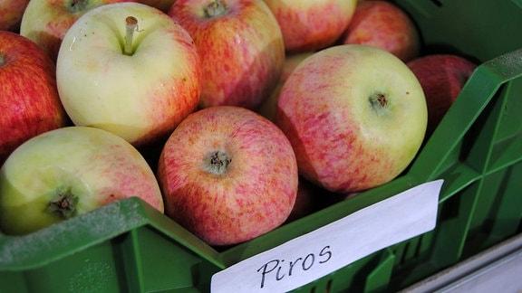 Zahlreiche rot-grüne Sommeräpfel der Sorte 'Piros' liegen in einer flachen, grünen Kunststoffkiste