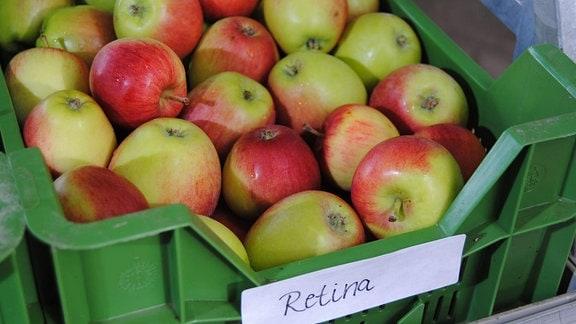 Zahlreiche rot-grüne Sommeräpfel der Sorte 'Retina' liegen in einer flachen, grünen Kunststoffkiste