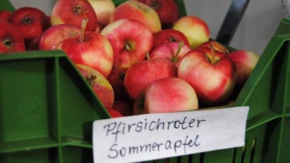 Zahlreiche rot Sommeräpfel mit grünen Flecken der Sorte 'Pfirsichroter Sommerapfel' liegen in einer flachen, grünen Kunststoffkiste
