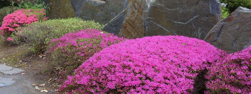 Außergewöhnlich Azaleen: Blütenwunder für den Hausgarten | MDR.DE @LH_39