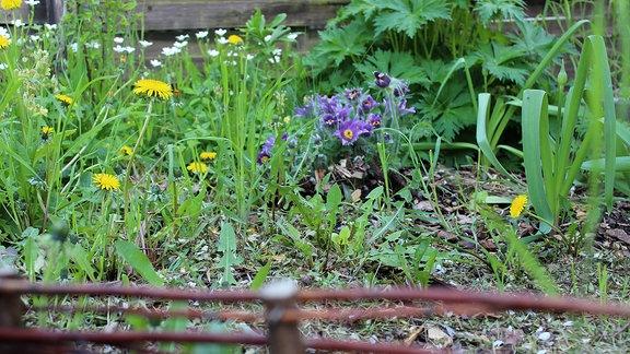Hinter einem Weidenzaun befinden sich allerlei Wildkräuter und -pflanzen.