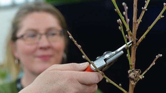 Baumexpertin Baumschnitt Helma Bartholomay schneidet einen jungen Baum.