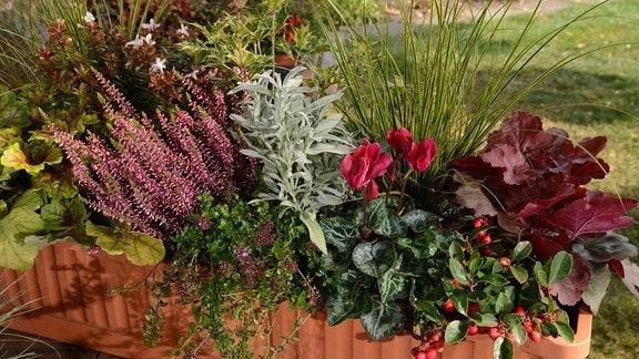 Zehn Tipps Für Einen Schönen Balkonkasten In Herbst Und Winter Mdrde