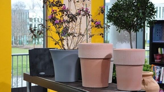 auf einer Art Theke stehen verschiedene Blumentöpfe aus Keramik Polyethylen, Polyrattan und Terracotta