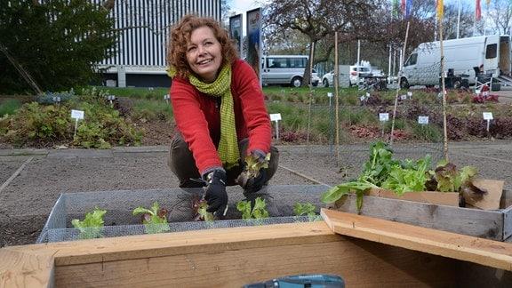 Eine Frau setzt Salat in die Erde. Im Vordergrund steht ein Holzkasten.