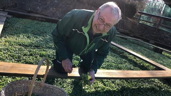 Ralf Fischer erntet Brunnenkresse