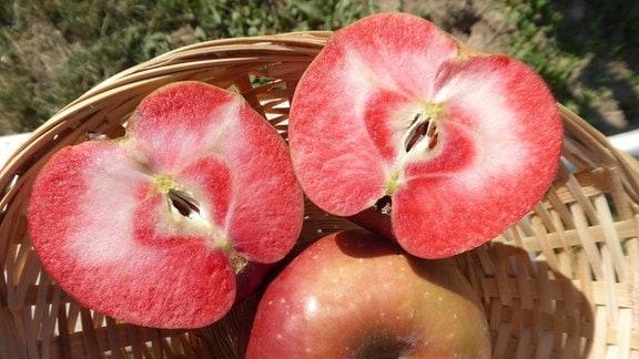 Apfelsorte 'Baya Marisa'