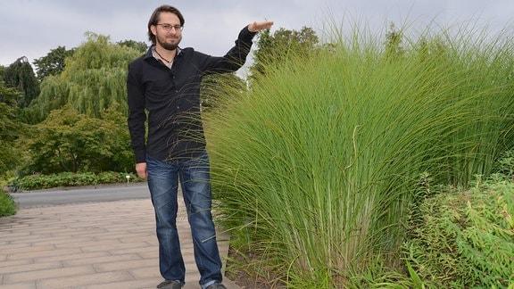 Gräserexperte Daniel Zugwurst steht neben mannshohem Chinaschilf
