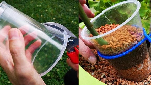 Platikbecher mit mit Schere eingeschnitten und Granulat und Erde in einem Plastikbecher geschichtet