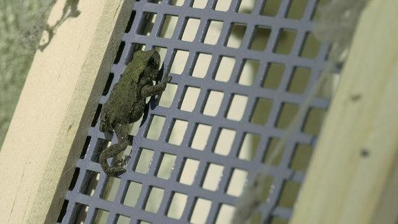 Frosch auf  Froschleiter