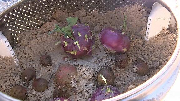 Gemüse zur Lagerung in einer alten Waschmaschinentrommel
