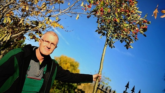 Gärtner Thomas Ackermann hält den Stamm eines Jungen Zierapfelbaumes.
