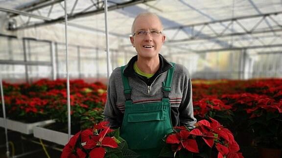 Gärtner Thomas Ackermann hält Weihnachtssterne in der Hand