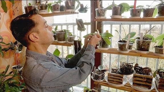 Ein Orchideensammler begutachtet seine Pflanzen