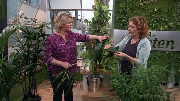 Zwei Frauen betrachten Zimmerpflanzen.