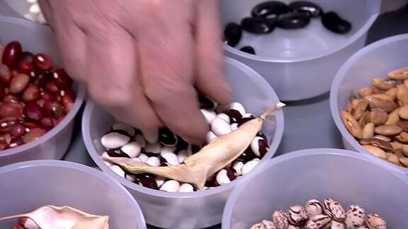 Eine Hand greift nach Samen in einer Schale.