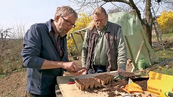 Die Herren Heiß und Krumbein bestücken Aussaatschälchen mit Samen.